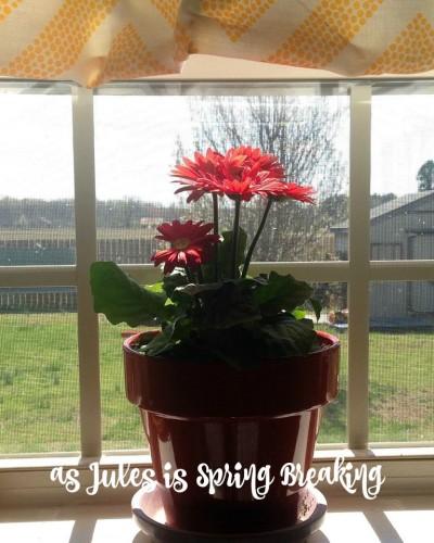 as Jules is Spring Breaking